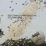 Balon Gas Pelepasan Murah Haji Cola